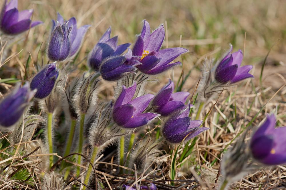 Der Frühling ist eingeläutet