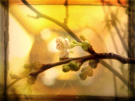 Der Frühling ist gelb ...