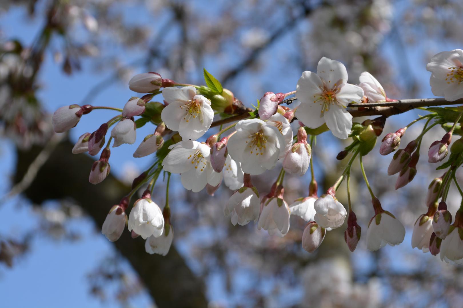 Der Frühling ist in Sicht