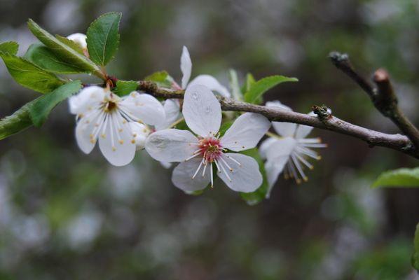 Der Frühling ist nahe...