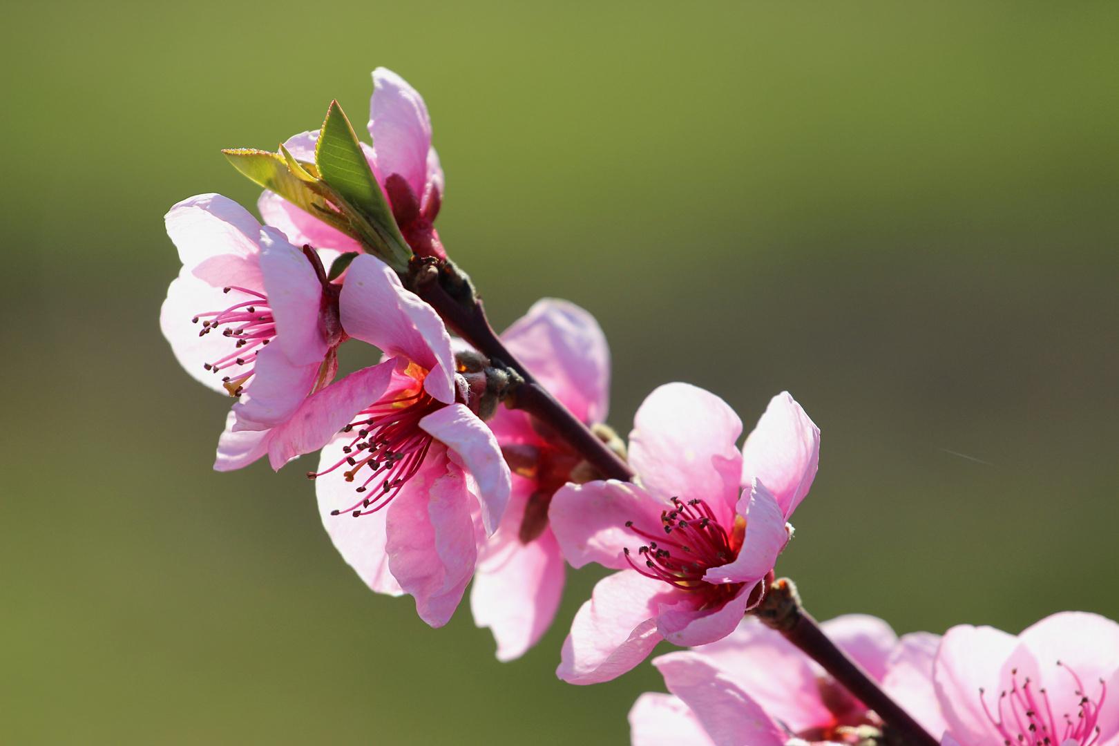 Der Frühling ist nicht mehr aufzuhalten...