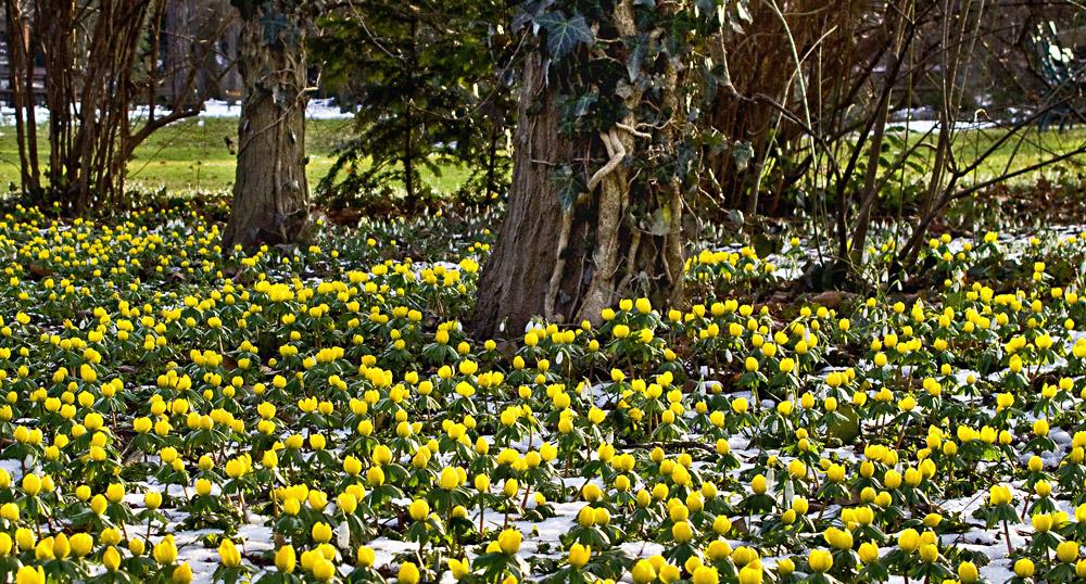 Der Frühling ist nicht mehr aufzuhalten!