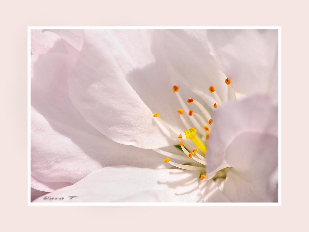 Der Frühling ist rosa [2]