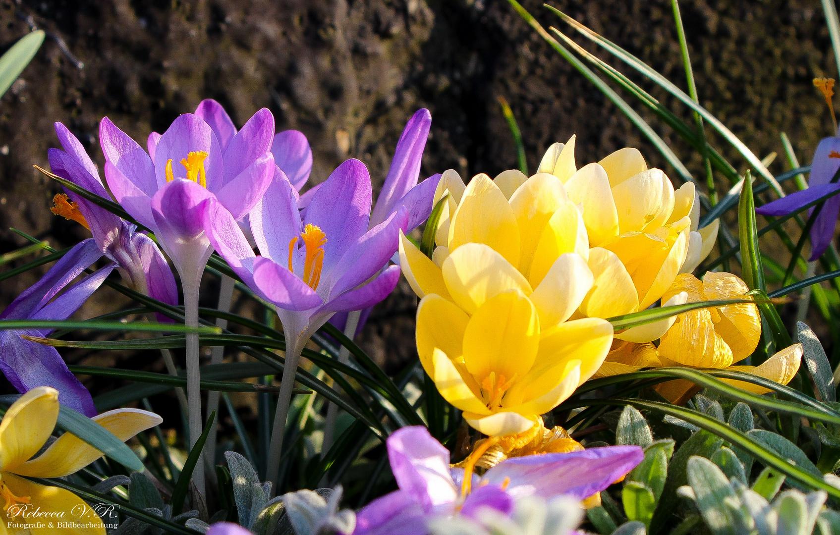 Der Frühling ist schon da :)