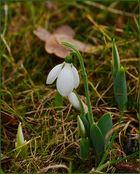 Der Frühling ist schon im Kommen...