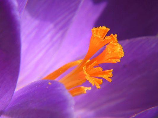 Der Frühling ist unterwegs