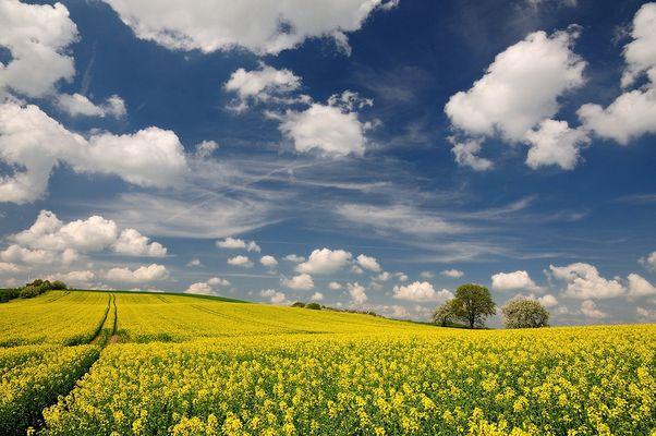 Der Frühling ist voll im Gange, jetzt kommt Farbe ins Spiel.