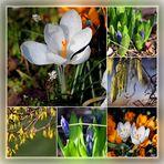 Der Frühling ist zu Gast