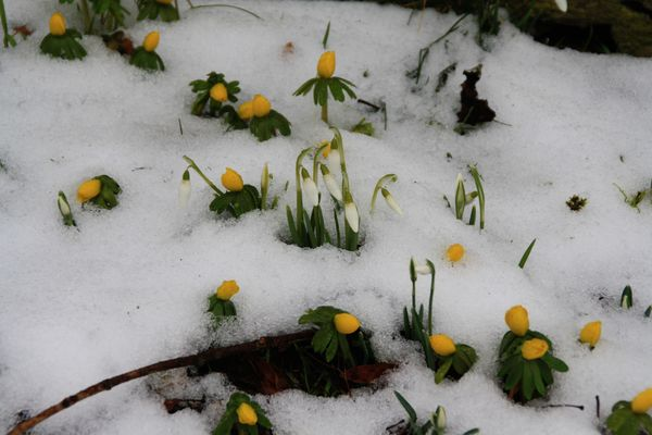 Der Frühling kämpft sich durch
