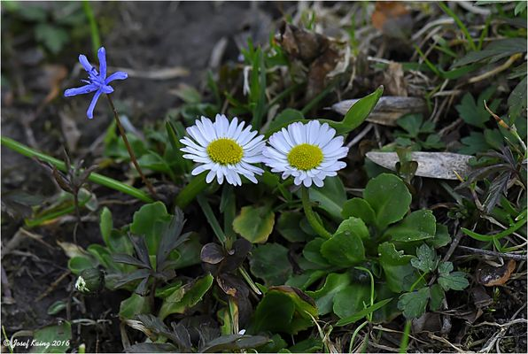Der Frühling kann kommen