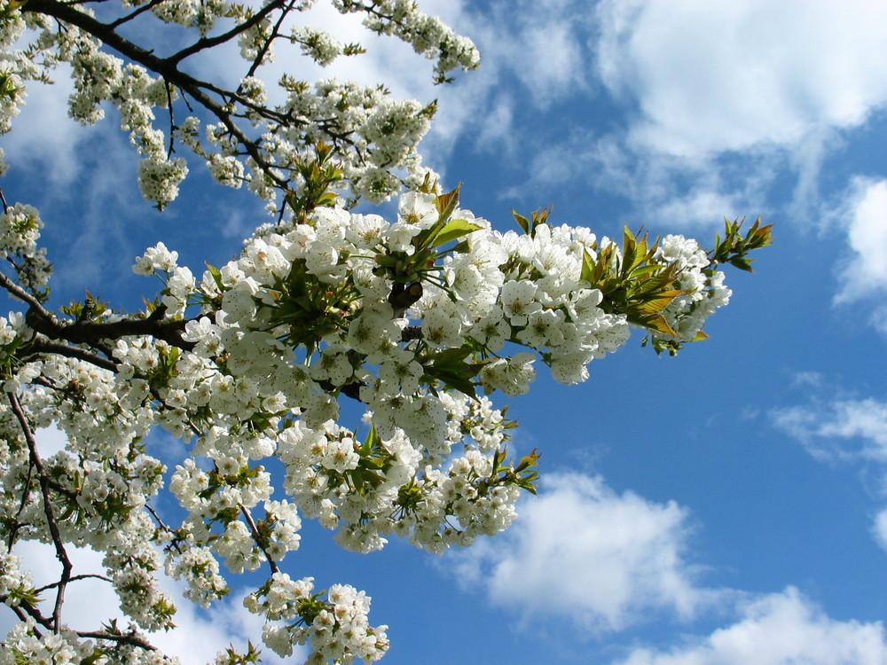 Der Frühling kann kommen ;-)