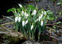 der Frühling klopft an... von ~ eva w. ~