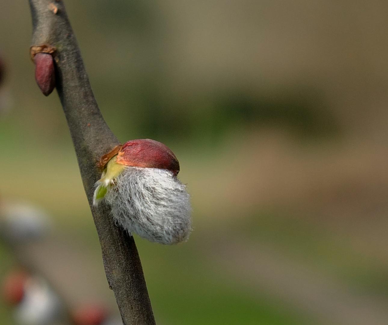Der Frühling klopft an, ich kann ihn sehen und hören