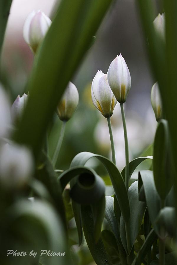 Der Frühling kommt 05