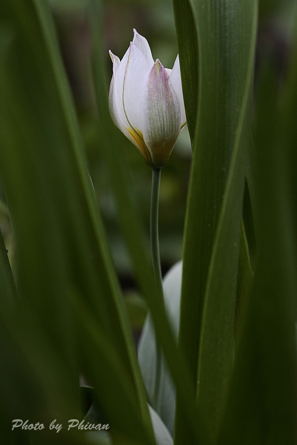 Der Frühling kommt 06