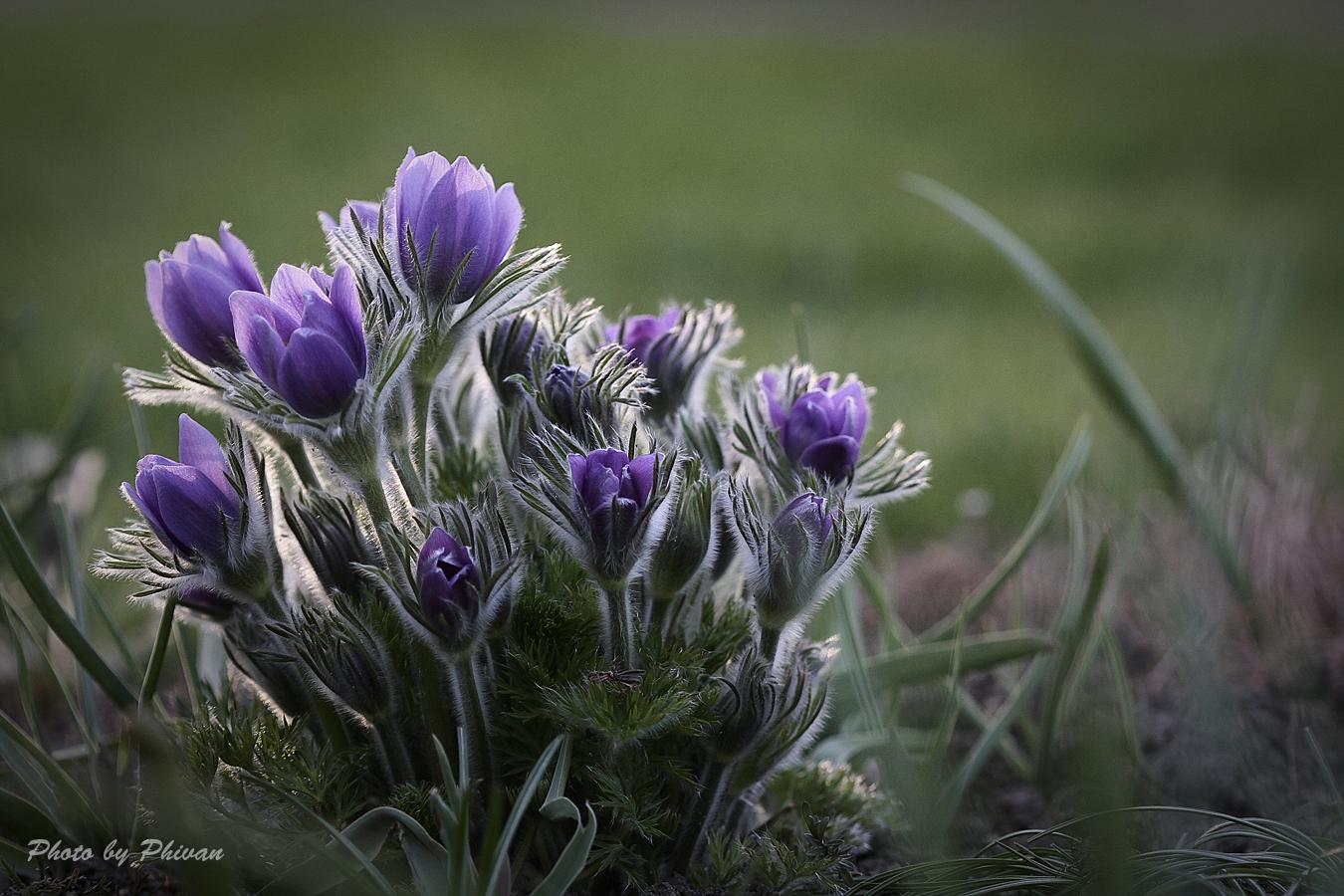 Der Frühling kommt 07