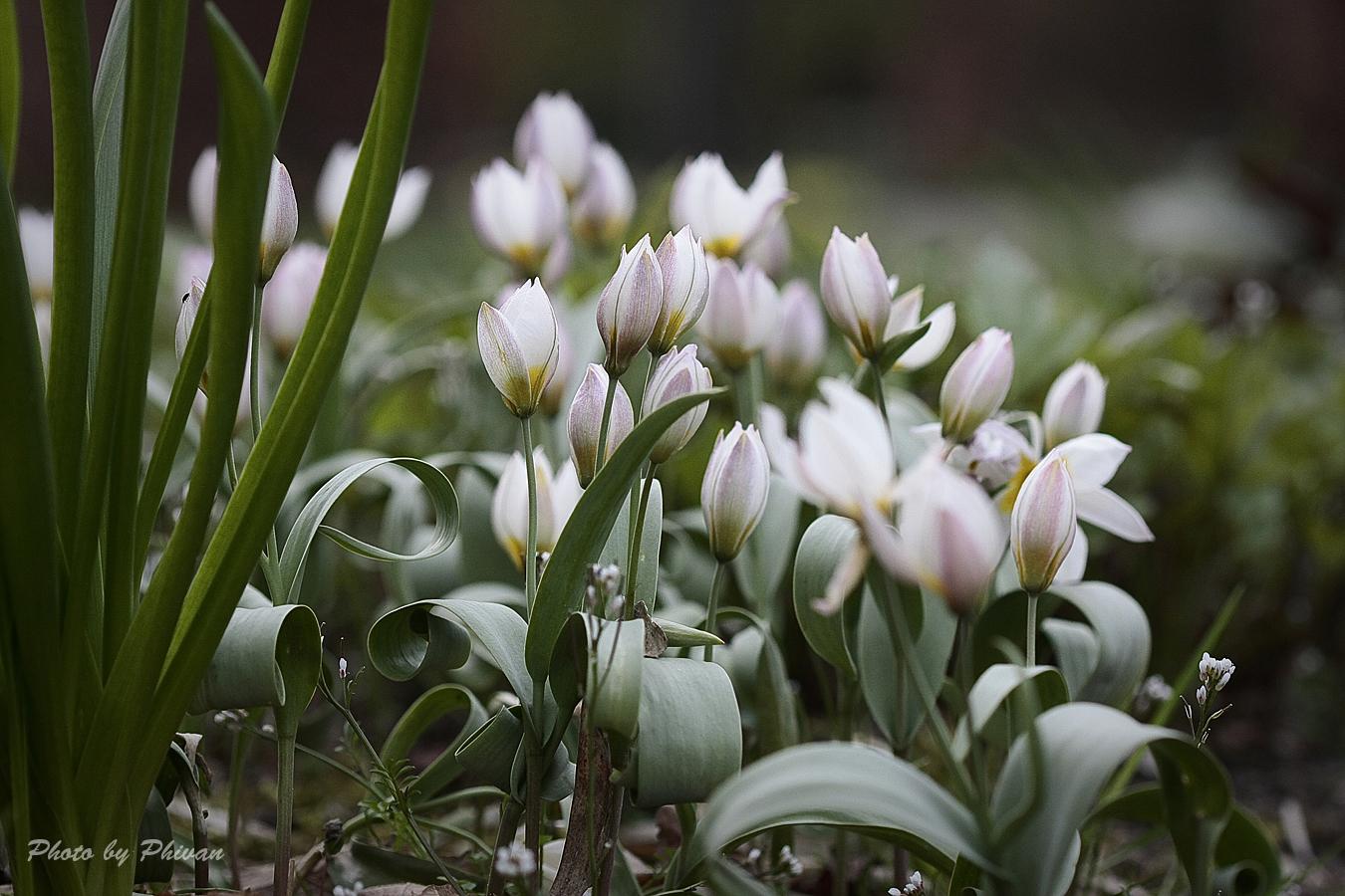 Der Frühling kommt 08