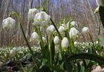 Der Frühling kommt # 2