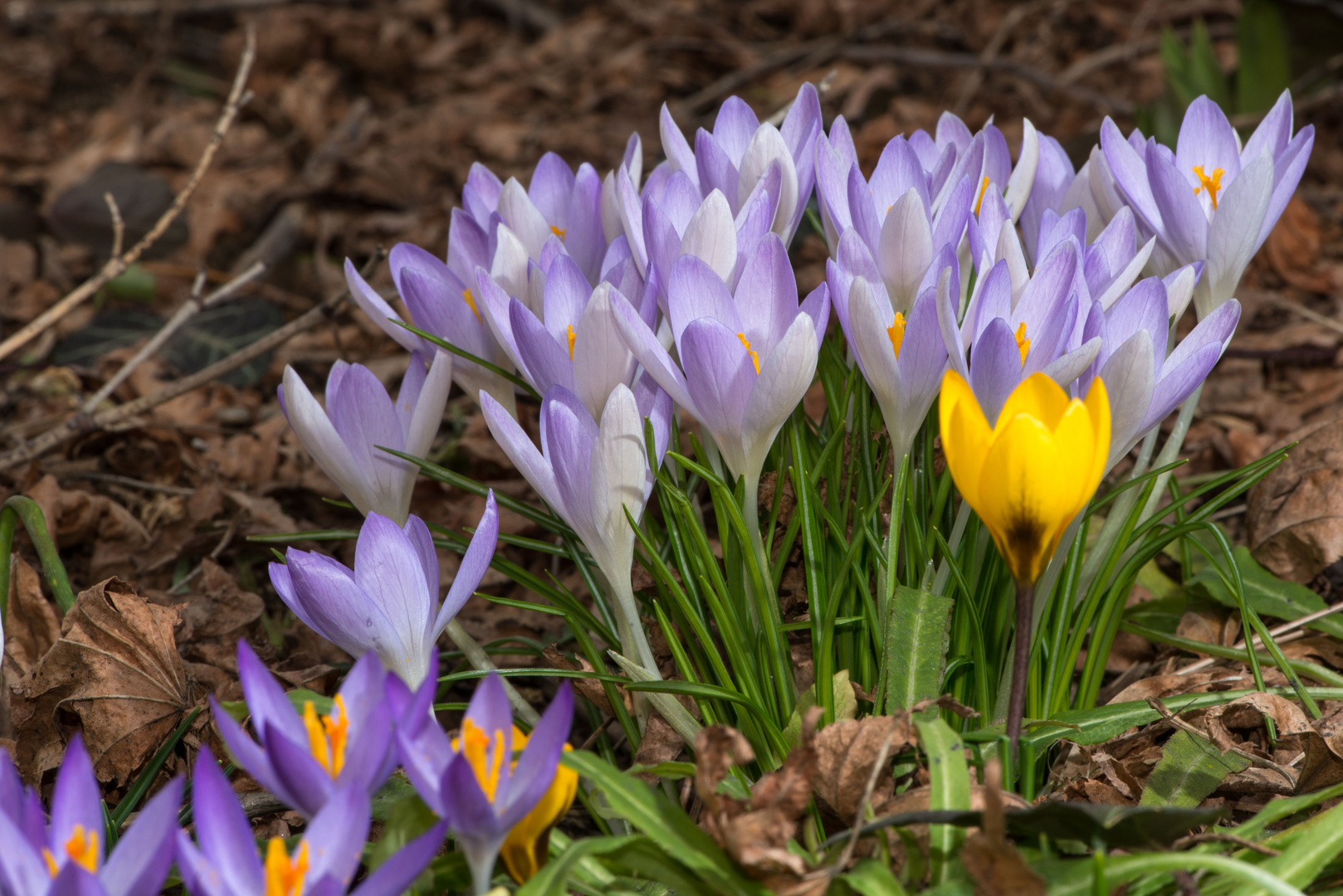 Der Frühling kommt - 2