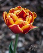 Der Frühling kommt <3