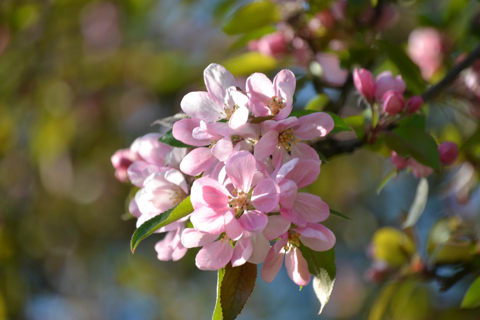Der Frühling kommt,,,,