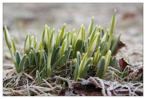 Der Frühling kommt !