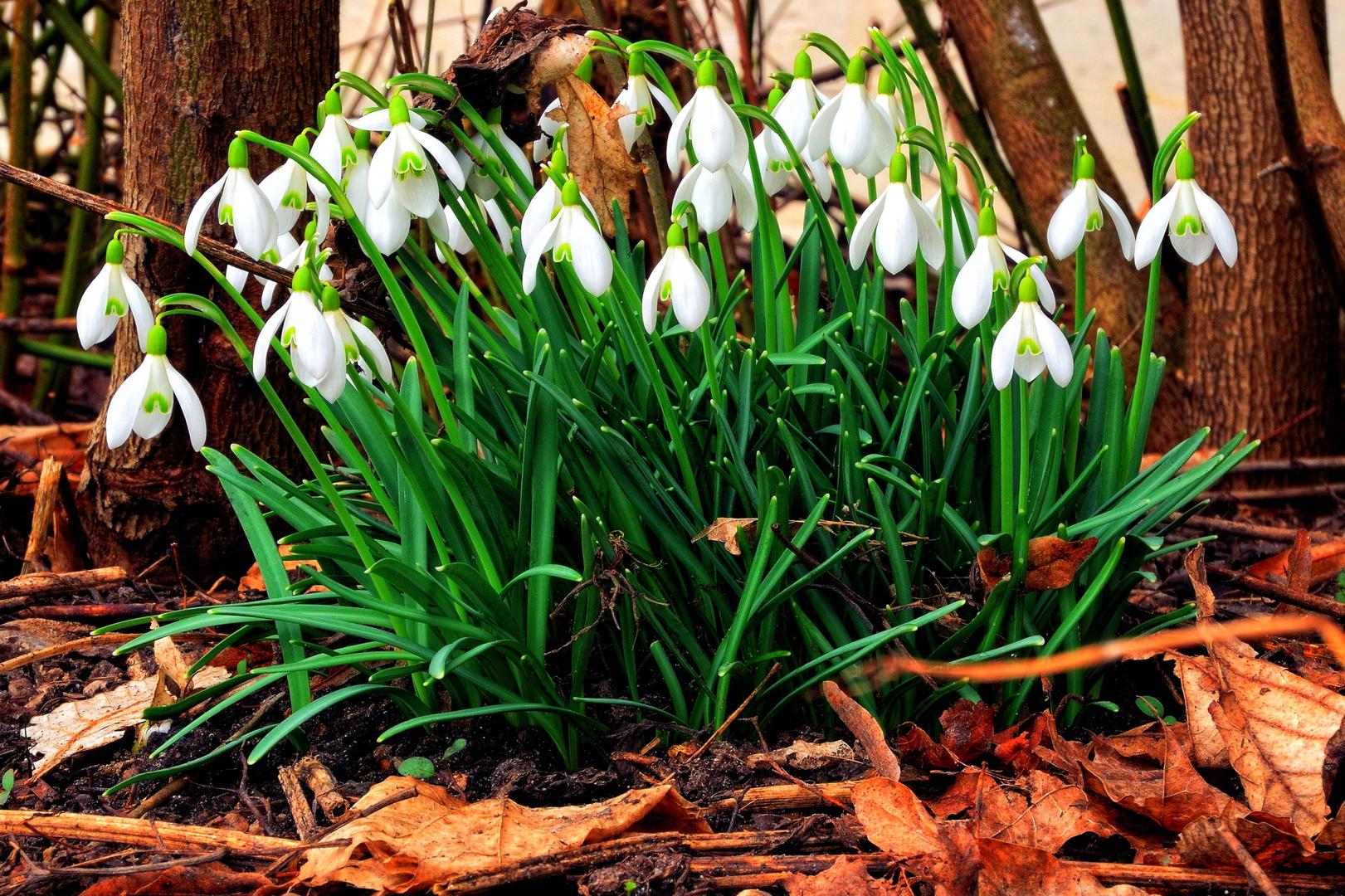 Der Frühling kommt....