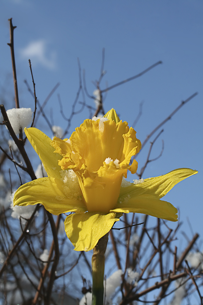 Der Frühling kommt ...