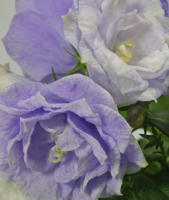 der Frühling kommt..... 8 (bald)