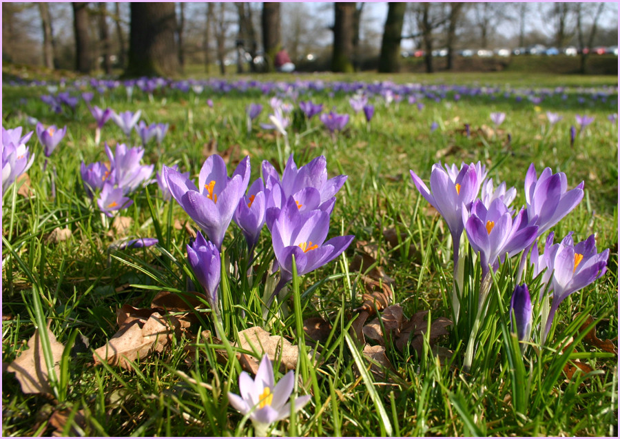 Der Frühling kommt ......