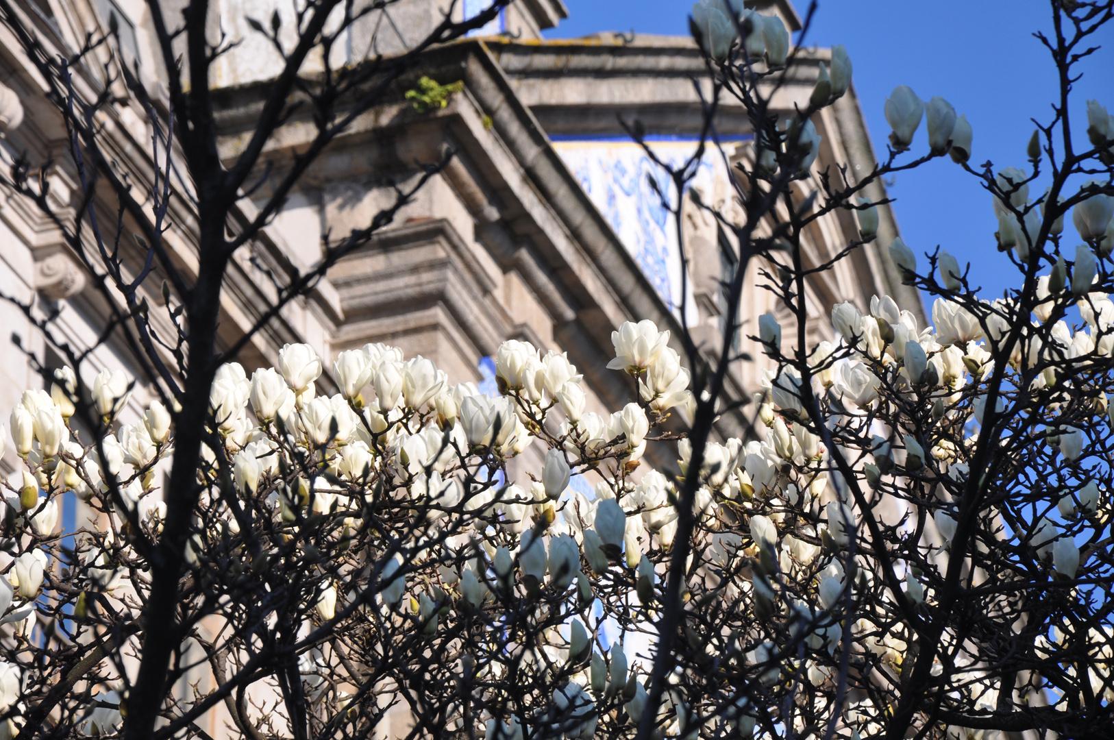 Der Frühling kommt bestimmt