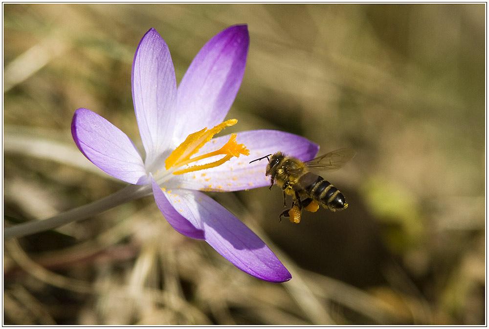 Der Frühling kommt ....