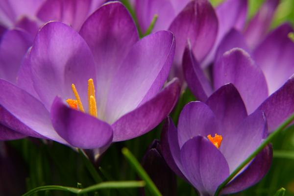...der Frühling kommt...