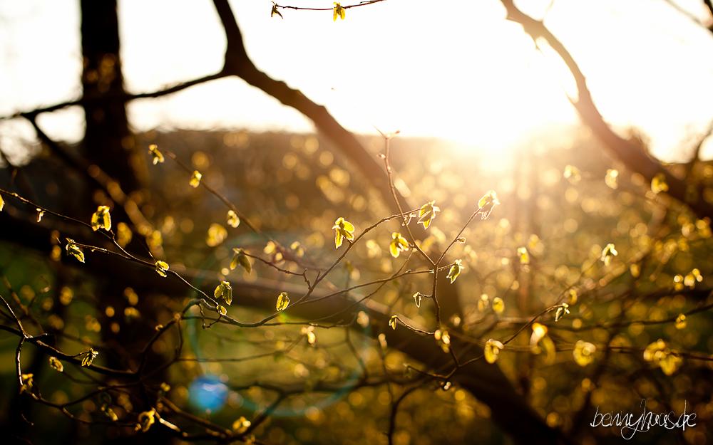 Der Frühling kommt...