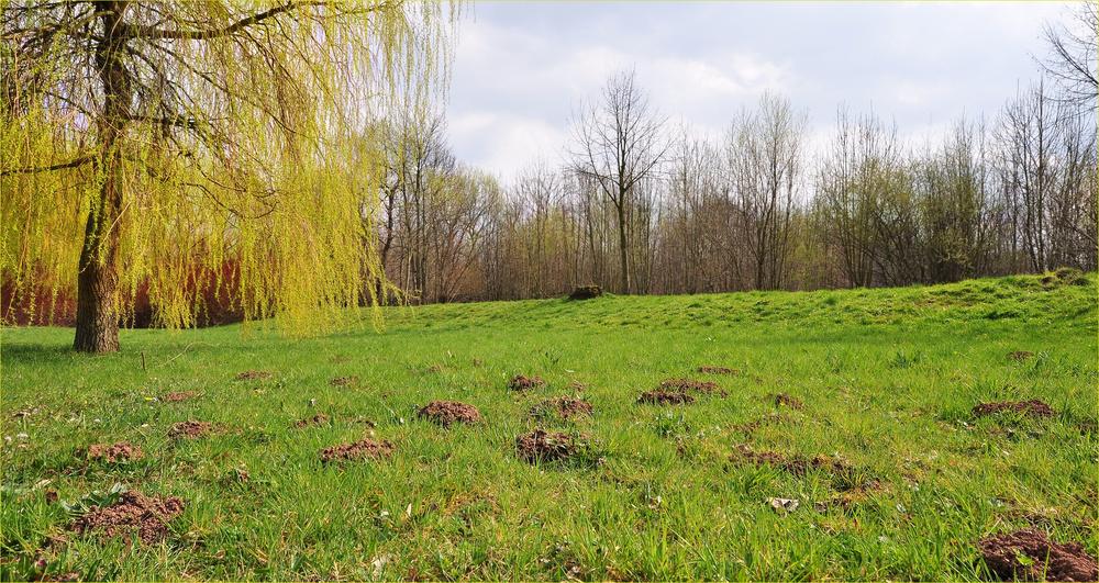 Der Frühling kommt, die Maulwurfshügeln sprießen schon,