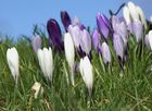 Der Frühling kommt doch...