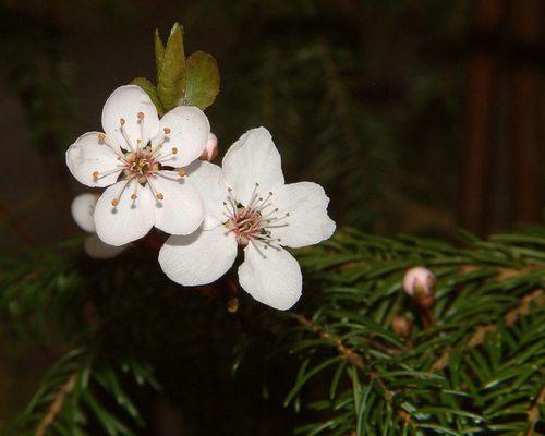 Der Frühling kommt im Sauseschritt.
