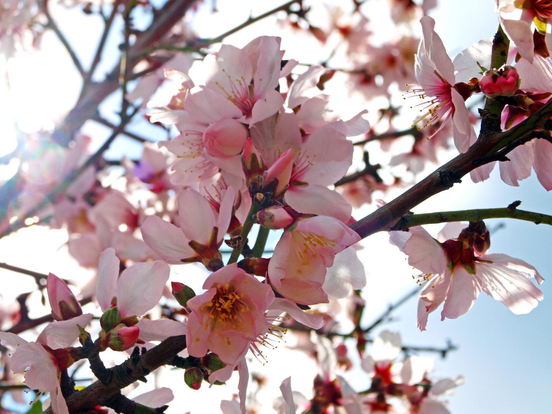 Der Frühling kommt schon irgendwann...