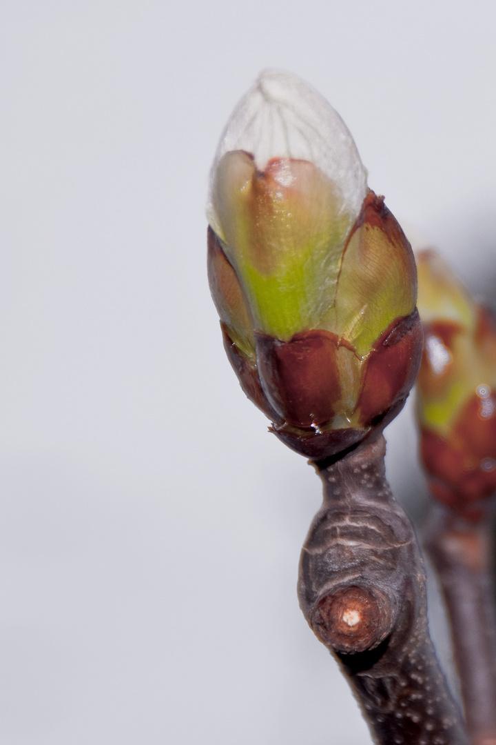 Der Frühling kommt Teil1