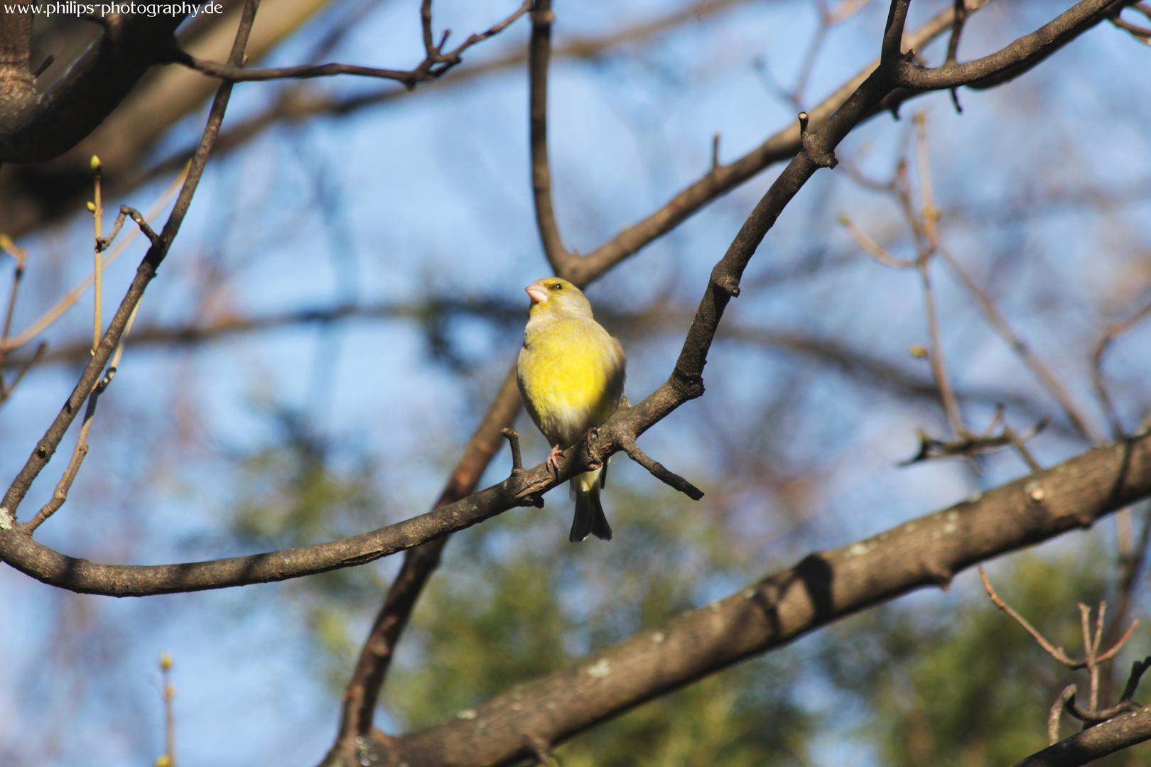 Der Frühling kommt und die Vögel zwitschern