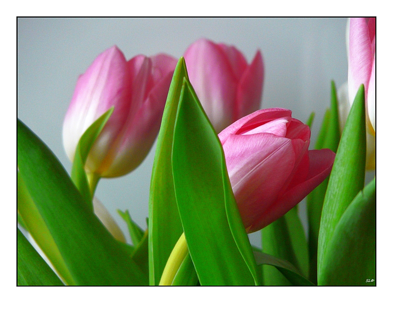 Der Frühling läßt grüßen ...