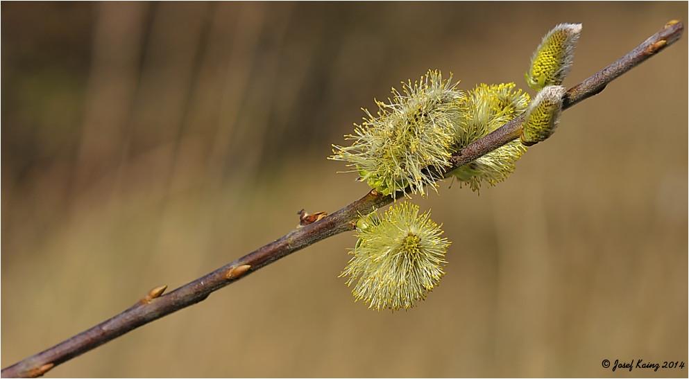 Der Frühling läßt grüßen