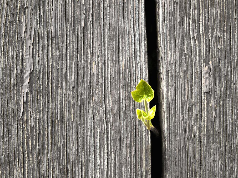 Der Frühling lässt nichts unberührt...