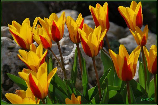 Der Frühling läßt sich blicken (1)