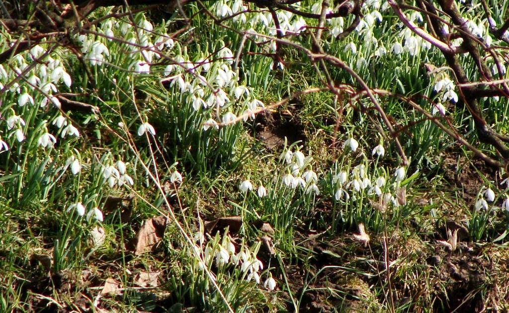 Der Frühling lässt sich blicken.....
