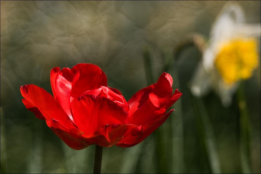 Der Frühling lässt sich trotz allen Regens nicht aufhalten...