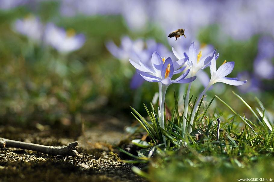 Der Frühling naht...