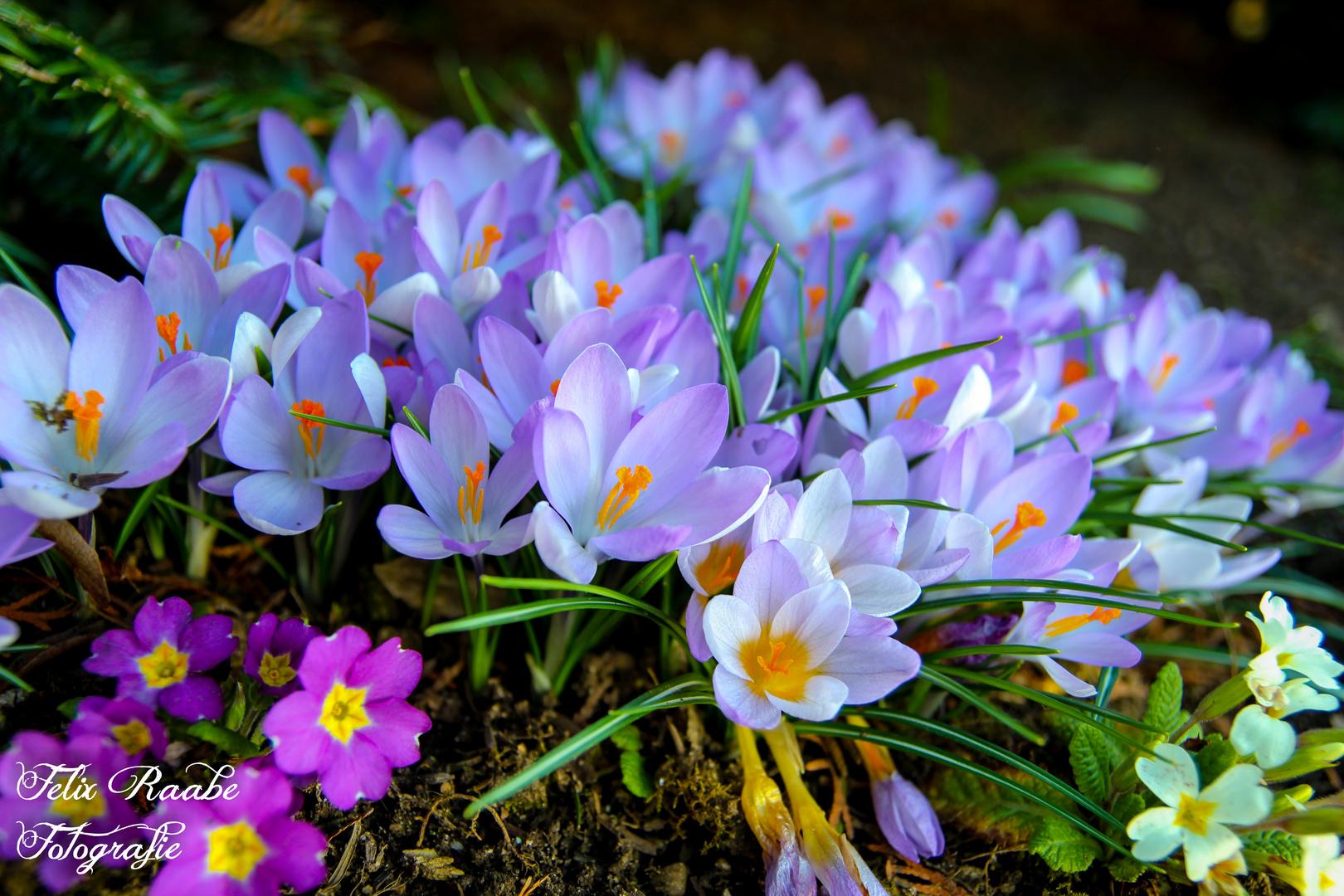 Der Frühling naht.
