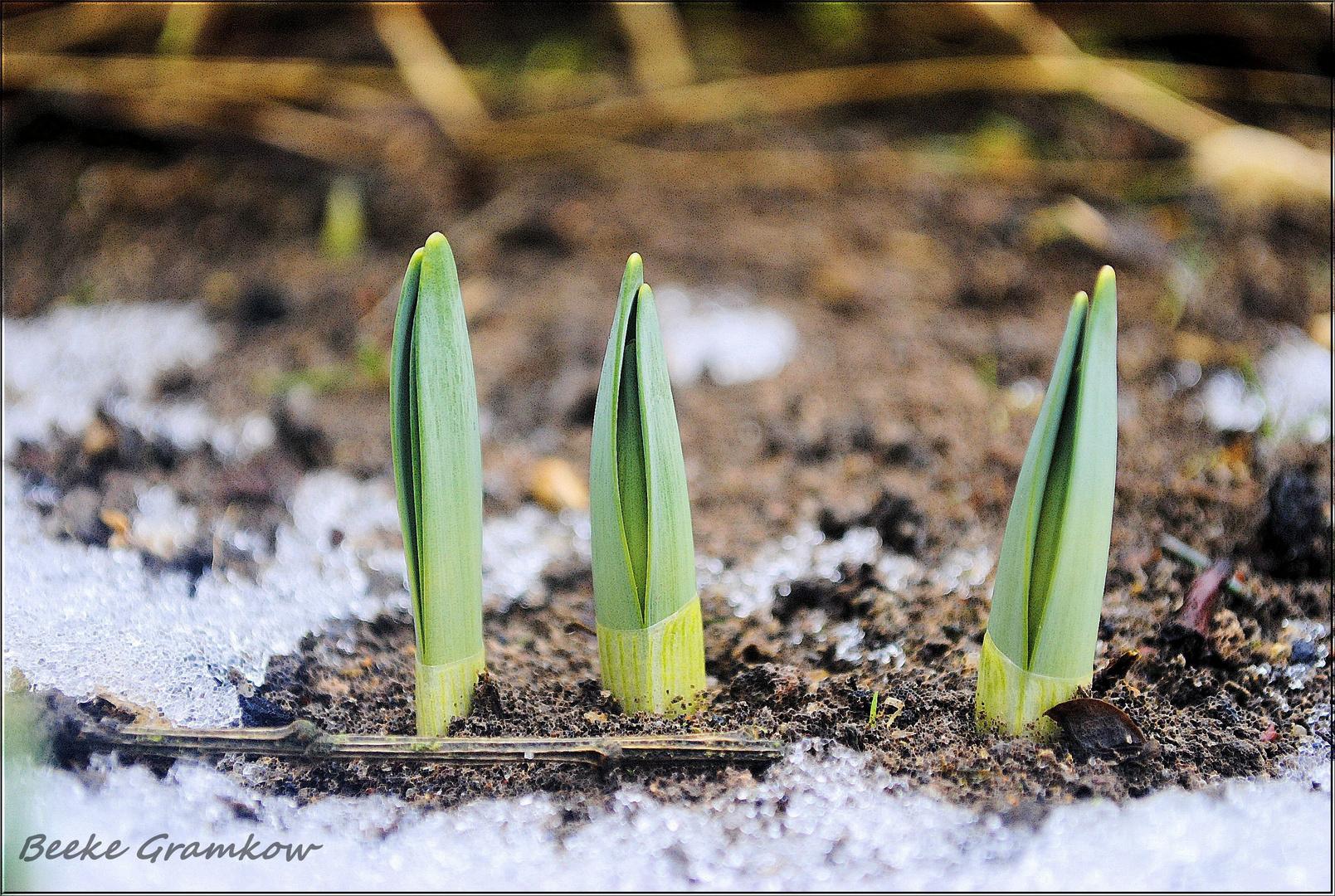 Der Frühling ruft