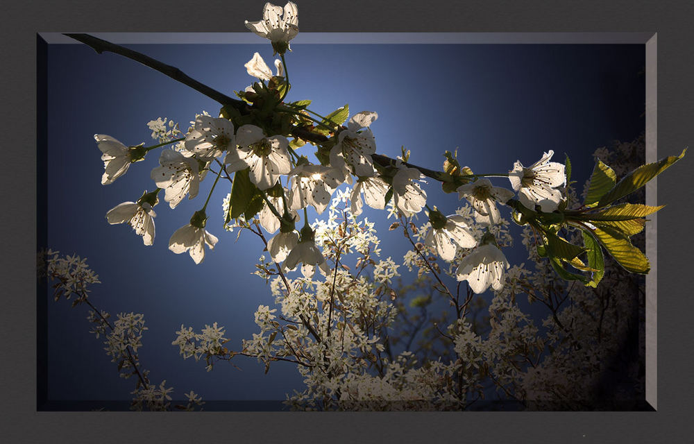 Der Frühling schaut rein